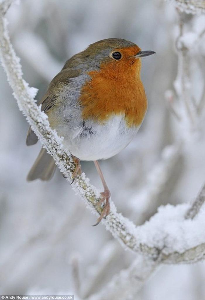 Inverno ancora super latitante dall'Europa ma se ci sei batti un ...