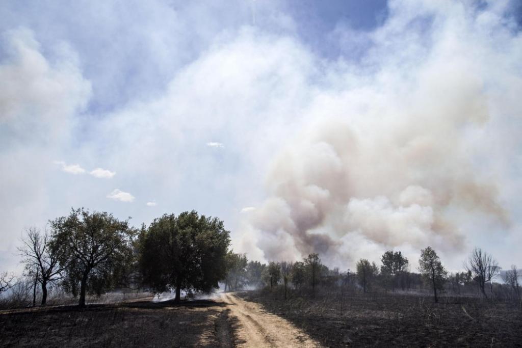 Incendi, a Roma, brucia la pineta Sacchetti